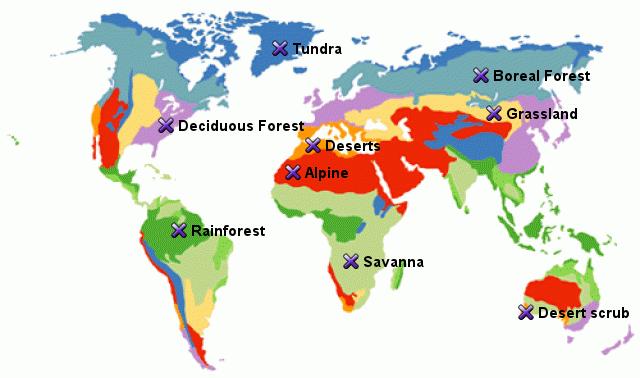 StepMap - World Biome Map - Landkarte für World on